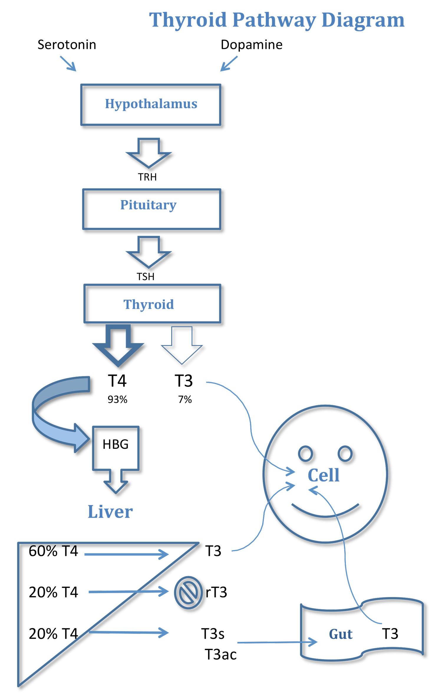 Metabolic Pathway Diagram